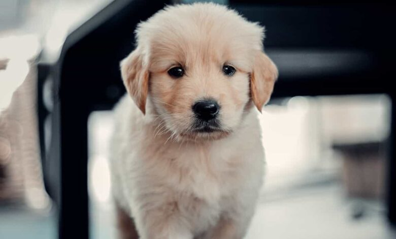 learn more about insurance for dogs